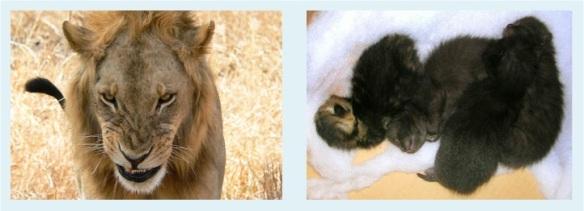 fluffy kittens2